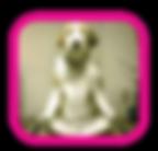 dog yoga, om, doga, meditation, dog, excercise