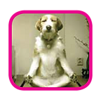 dog yoga, om, doga, meditation, dog, excercise
