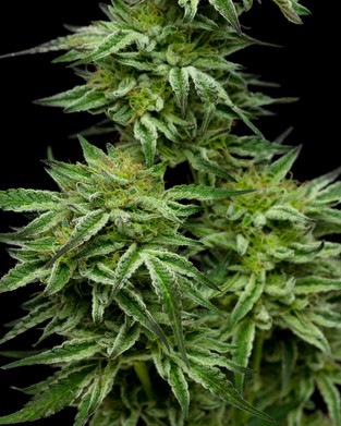Finding Relief During Cancer Treatments With Cannabis