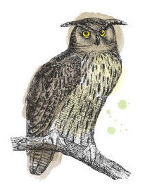 services owl.jpg
