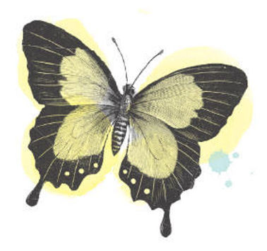 clients butterfly.jpg