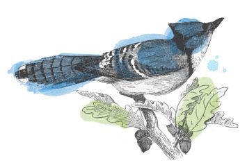 blog bluebird.jpg