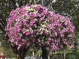 flower baskets up close 2019.jpg