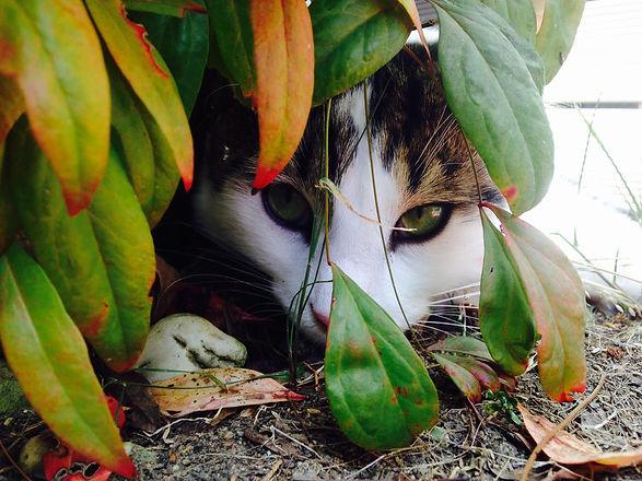 harv in bushes.jpg