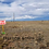 Thumbnail: 1.0  acres in the stunning Torrance County, New Mexico