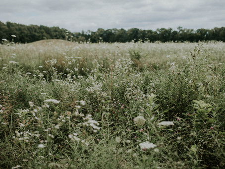 Planting Wildflowers: Seeds of Peace