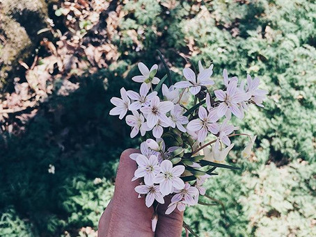 Planting Wildflowers: Seeds of JOY