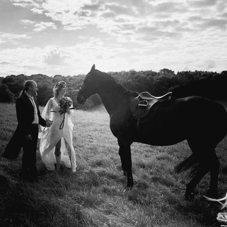 ligher horse_.jpg