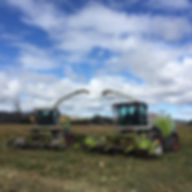 Maloney's-Ag-Contracting-Claas-forage-harvester