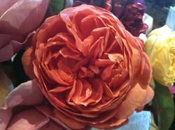 Delicious Rose