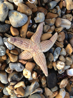 Washed Up Starfish