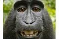 Auteursrechtzaak over selfie aap