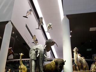 Museum Naturalis moet vanwege auteursrecht verbouwing staken
