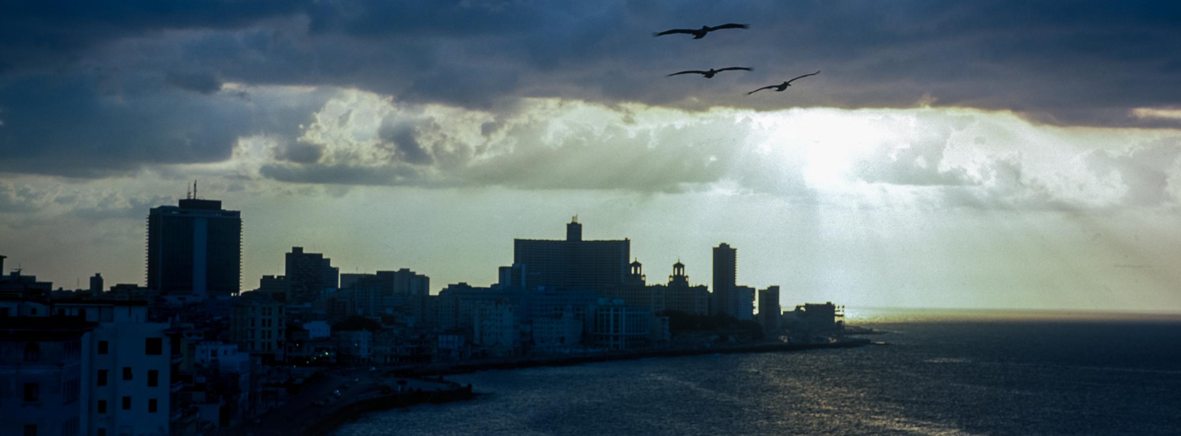 Пеликаны над Гаваной