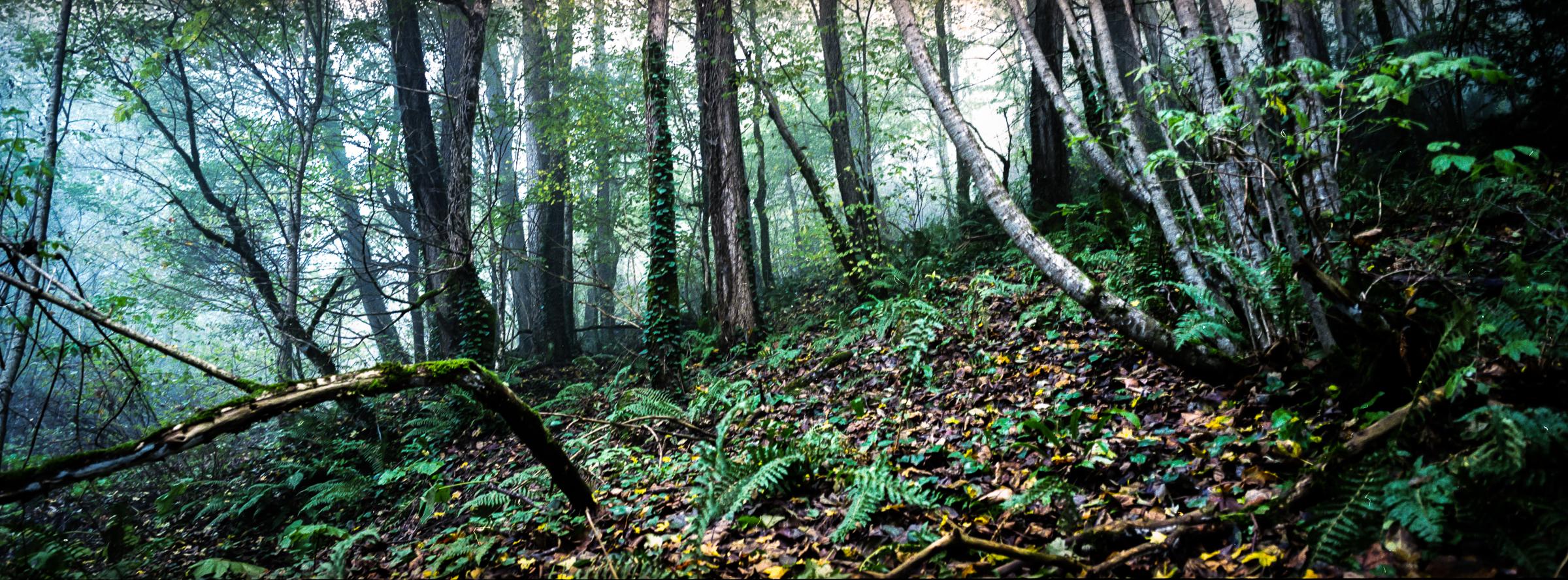 Лес в Гуамском ущелье