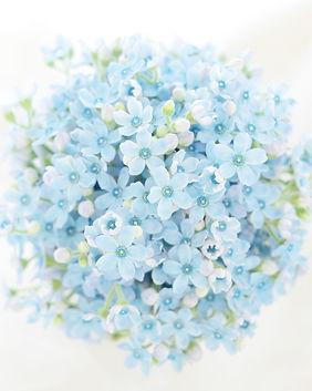 2ブルースター1022aso-blue-bouquet.JPG