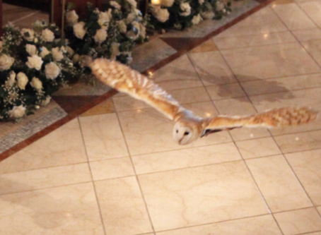 【12月5日】第15回MamaLady【クリスマスパーティー】