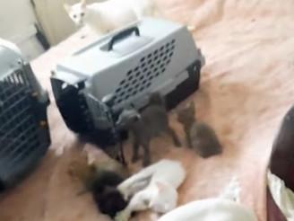 Rescatan 17 gatos y hallan 6 muertos en heladera al allanar casa en el barrio porteño de Palermo