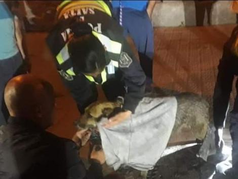 #Capital Policías rescataron a una perrita que quedó atrapada en un desagüe