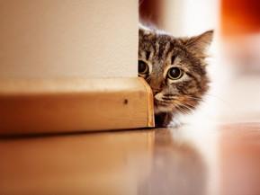 Buscan conservar material genético de perros y gatos a partir del congelamiento de semen