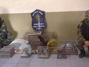 La Policía Rural rescató aves en cautiverio en una casa de Vaqueros
