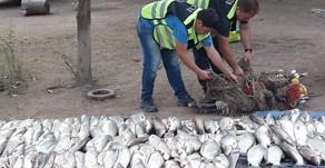 #Pichanal La Policía secuestró una importante cantidad de productos ictícolas