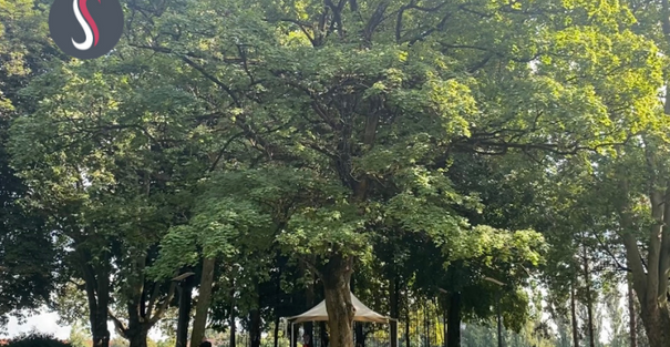 Le grand chêne du parc Wilson
