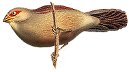 Oiseau%20brun_edited.png
