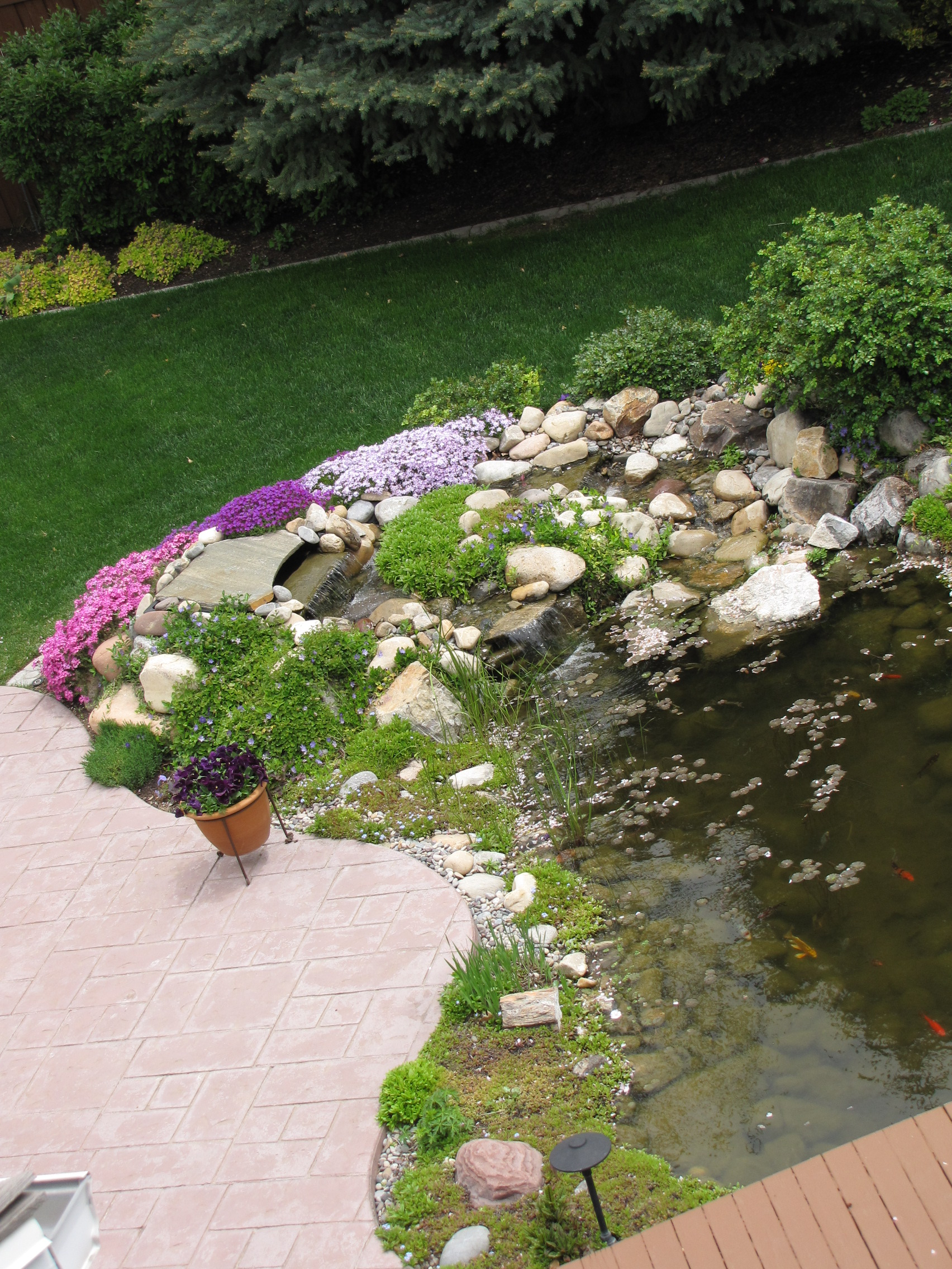 Pond with annuals