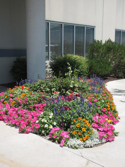 Beautiful annuals