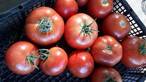 Beef tomatoes.jpg