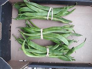 Runner beans.jpg