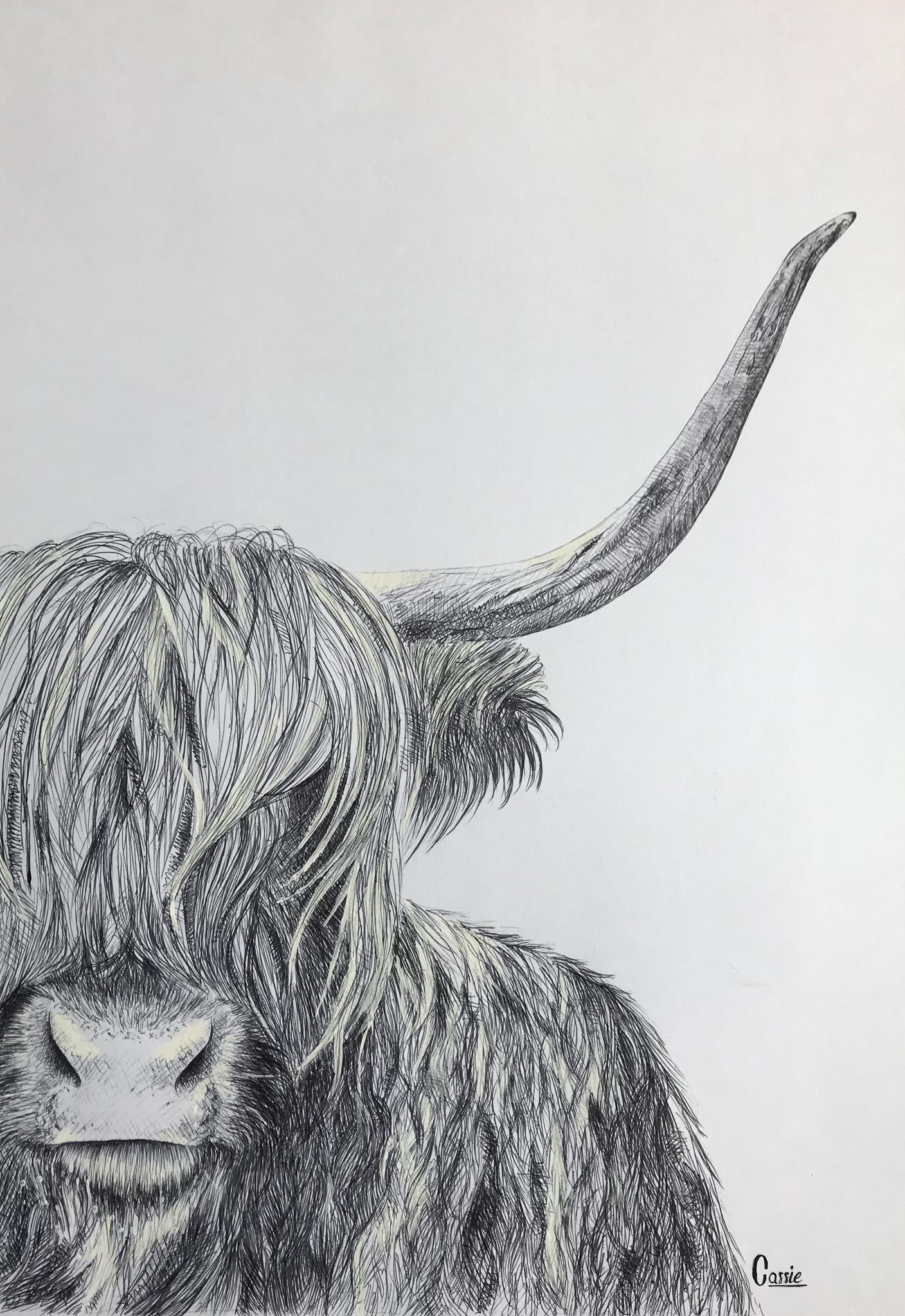 """Bò (""""vache"""" en Gaélique)"""