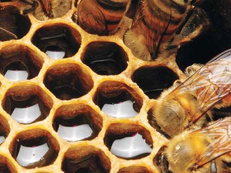Importanta albinelor si numeroasele propietati benefice ale mierii