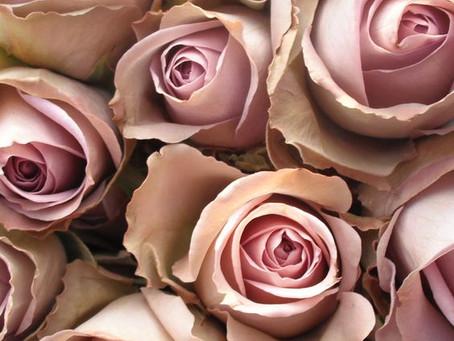Ceaiul de Petale de Trandafiri