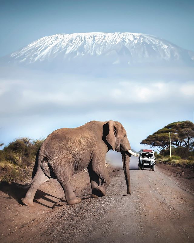A safari example in Kenya. Elephants are part of every safari. You could join after the Kilimanjaro climb. Picture from @davidmrule