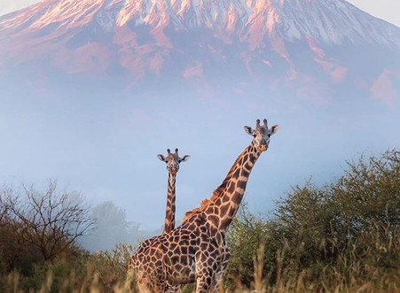 How to climb Kilimanjaro – All you need to know