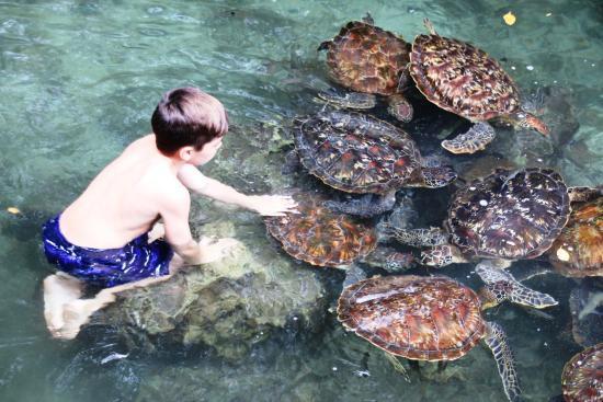 mnarani-marine-turtles.jpg