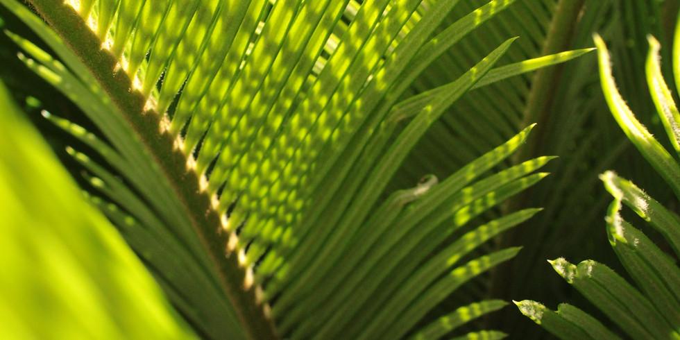 Palm Sunday: 10AM Service