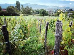 Vignobles de Savoie