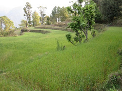 farm_rice_fields.jpg