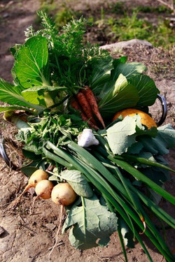 garden_harvest.jpg
