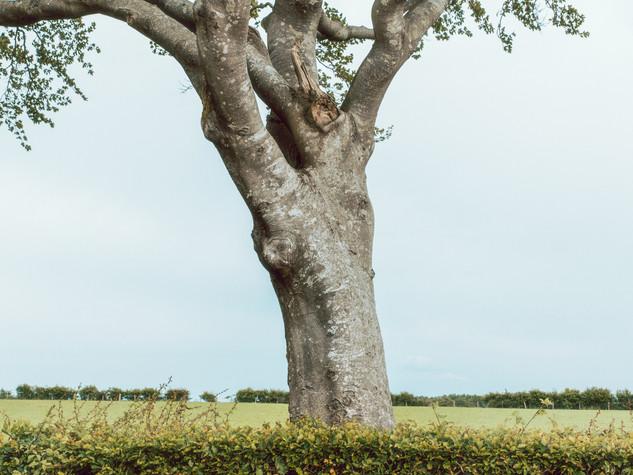 Tree Form 3000px 20.jpg