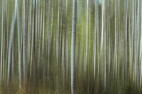 Latvia New Edits 3000px 3.jpg