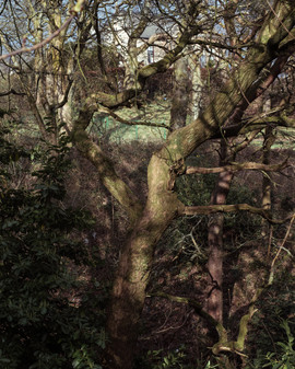 Tree Form 2021 Edits 1.jpg