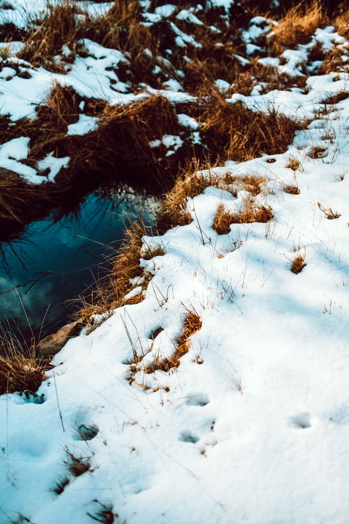 Finlas Forest Feb 2020 1500px 4.jpg