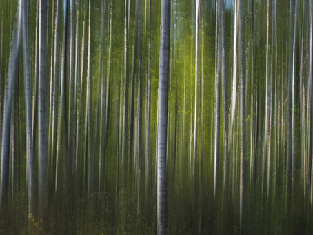 Lessons from Latvia, the land of forests and bogs