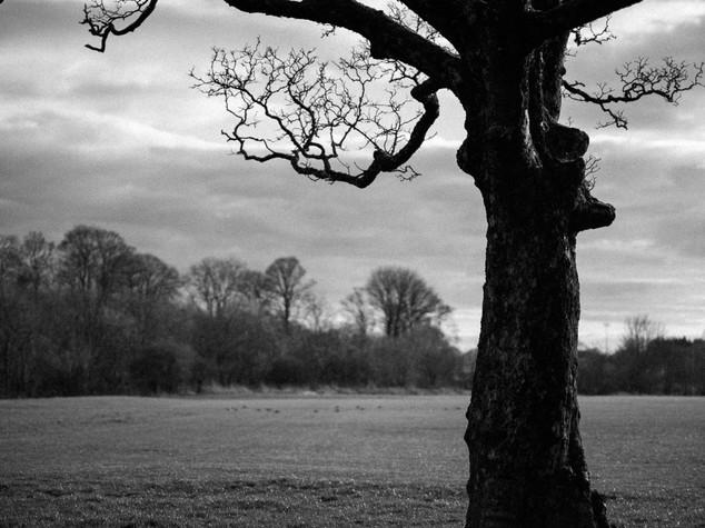 Tree Form 1.jpg