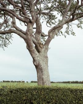 Tree Form 2021 Edits 8.jpg