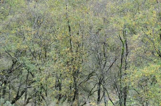 Birchscape (1).jpg